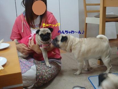 DSC04064_201307301953132a0.jpg