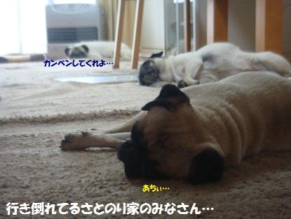 DSC04139_20130822184010c1a.jpg