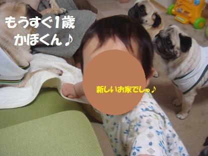 DSC04167_20130816125150400.jpg