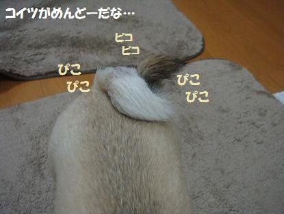 DSC04494_2013100516004117b.jpg