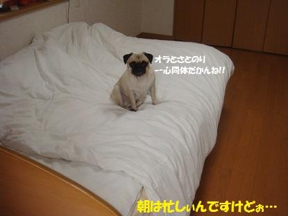 DSC04530_20131005154603dc6.jpg