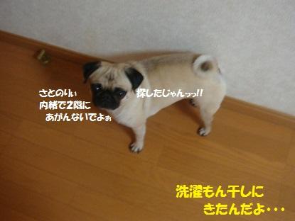 DSC04538_201310051546039ed.jpg