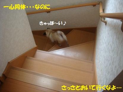 DSC04542_20131005154602a46.jpg