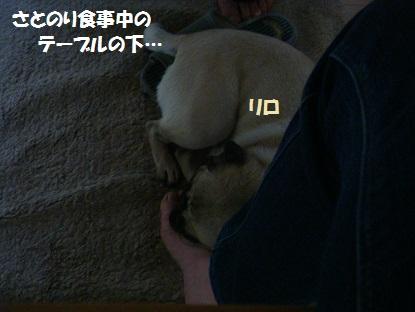 DSC04666_20131008020133a22.jpg