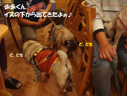 DSC04731_20131108213646710.jpg