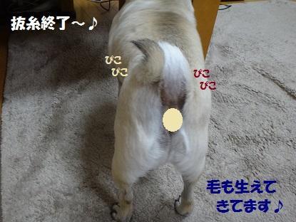DSC06655.jpg