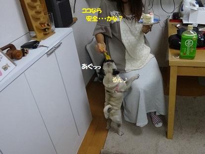 DSC08507_20130825143100f7e.jpg