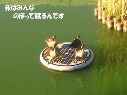 NEC_0015_20130918221833739.jpg