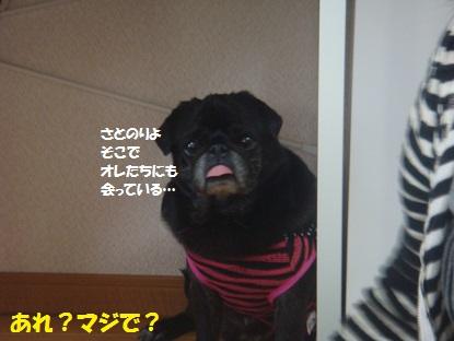 PMBS3869.jpg