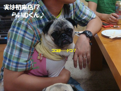 PMBS3880_20130721161955.jpg