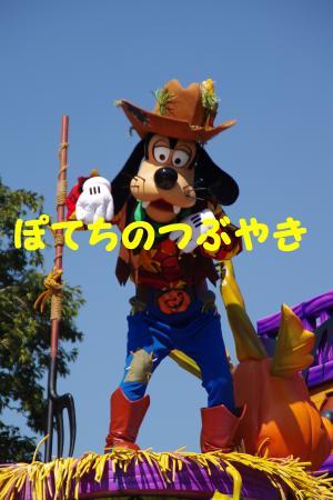20141020 グーさん (1)