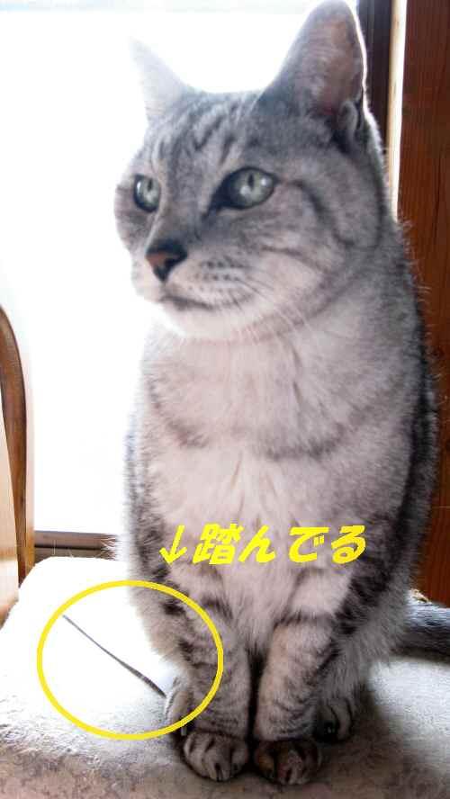 boo_20131109.jpg