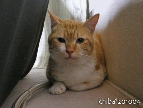 chiba13-04-33.jpg
