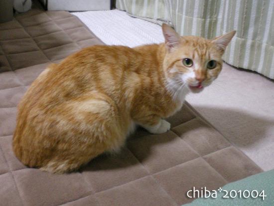 chiba13-04-40.jpg