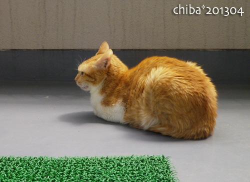 chiba13-04-55.jpg