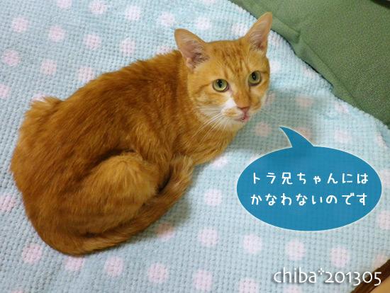 chiba13-05-103.jpg