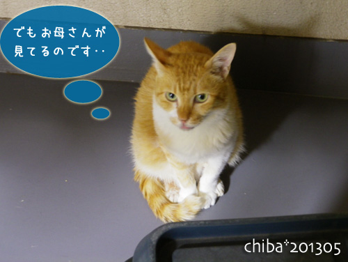 chiba13-05-107.jpg