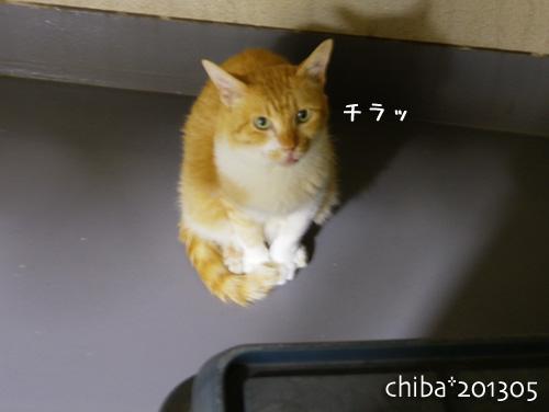 chiba13-05-109.jpg