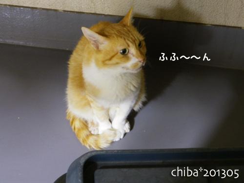 chiba13-05-110.jpg