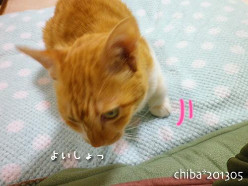 chiba13-05-133.jpg