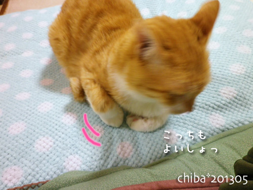 chiba13-05-135.jpg