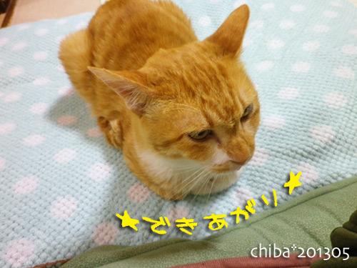 chiba13-05-137.jpg