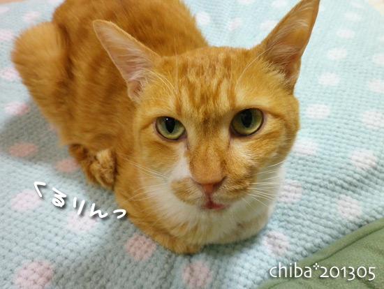 chiba13-05-138.jpg
