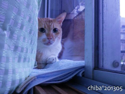 chiba13-05-139.jpg