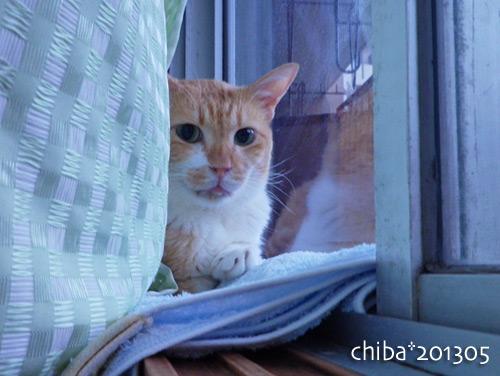 chiba13-05-141.jpg
