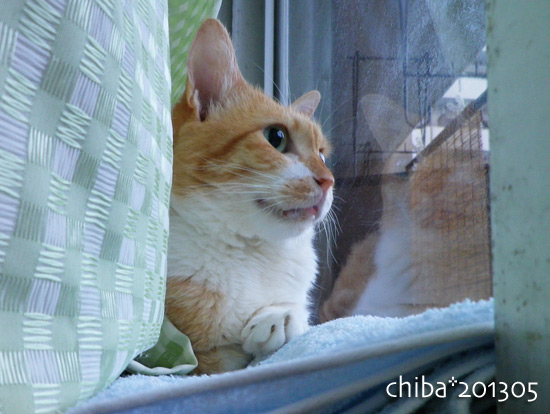 chiba13-05-143.jpg