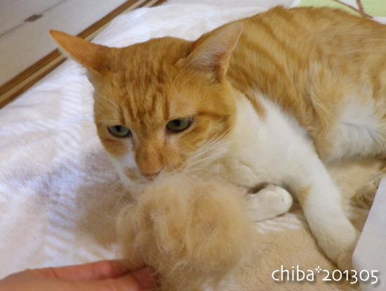 chiba13-05-25.jpg