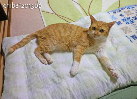 chiba13-06-102.jpg