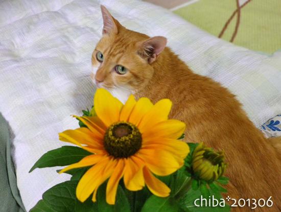 chiba13-06-153.jpg