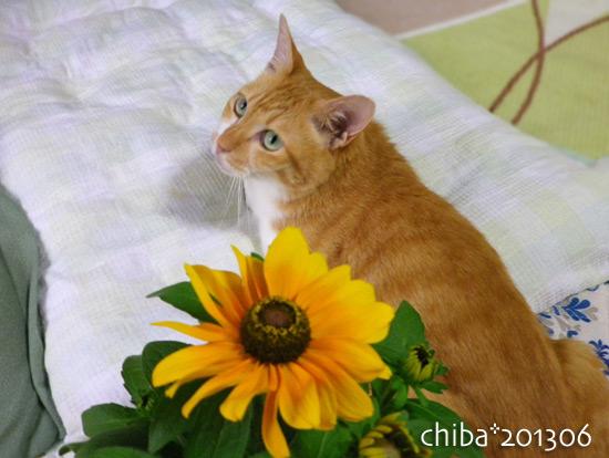 chiba13-06-155.jpg