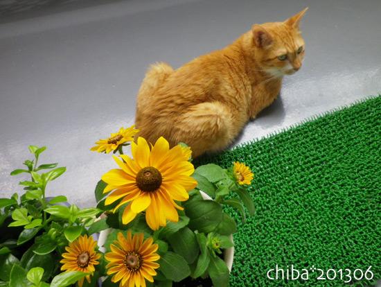 chiba13-06-207.jpg