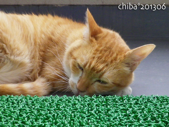 chiba13-06-211.jpg