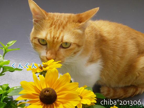 chiba13-06-249.jpg
