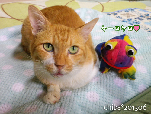 chiba13-06-79.jpg