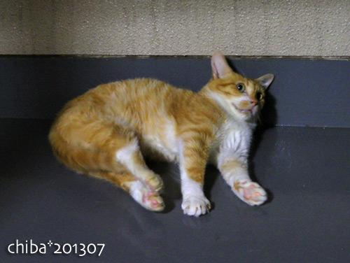 chiba13-07-11e.jpg