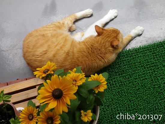 chiba13-07-22.jpg