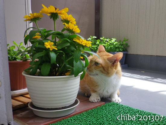 chiba13-07-23.jpg