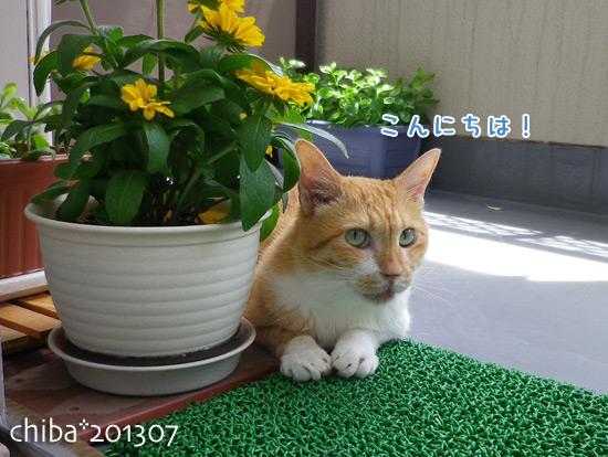 chiba13-07-29.jpg