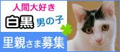 shirokuro_kun.jpg