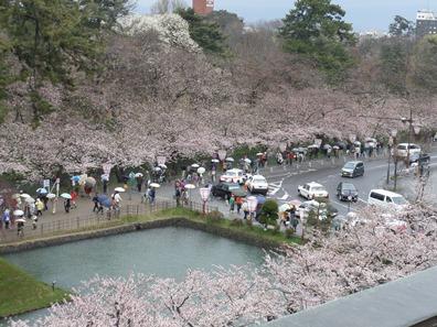 市役所屋上からの桜