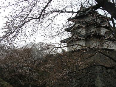 お城の桜は・・・
