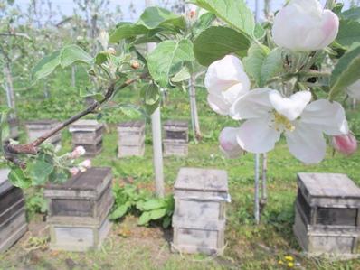ミツバチさん、大忙し♪
