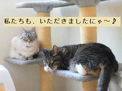 猫たんたち!(マロン・てて)