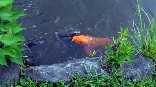クラキ公園 2013-08-29 (2)