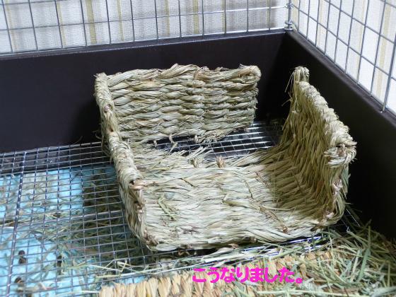 ぴょん子140123_04