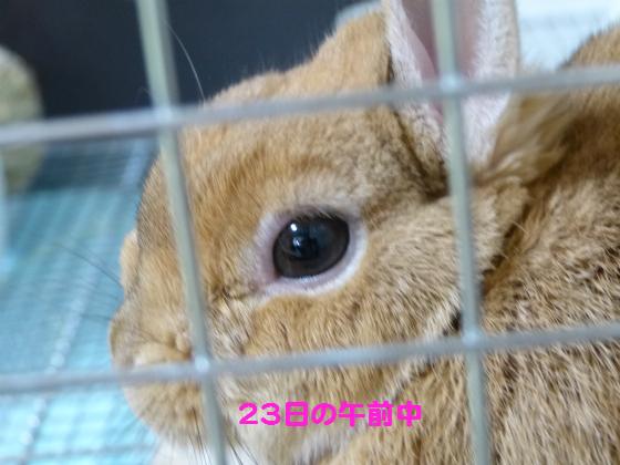 ぴょん子140123_07